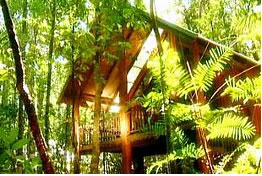 The Canopy Treehouses - Accommodation Gold Coast