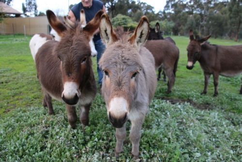 Donkey Tales Farm Cottages - Accommodation Gold Coast