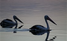 Lakeview Motor Inn - Belmont - Accommodation Gold Coast