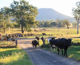 Tommerups Dairy Farmstay - Accommodation Gold Coast