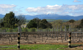 Buller View Wines - Accommodation Gold Coast