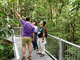 Daintree Discovery Centre - Accommodation Gold Coast