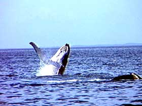Whale Watching - Accommodation Gold Coast