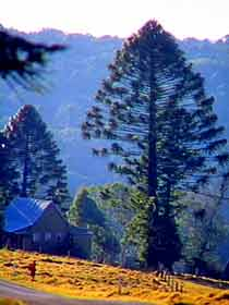 Bunya Mountains National Park - Accommodation Gold Coast