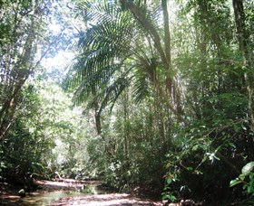 Mount Lewis National Park - Accommodation Gold Coast