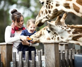 Taronga Western Plains Zoo Dubbo - Accommodation Gold Coast