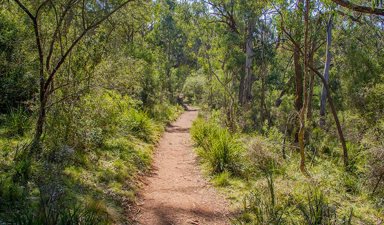 Mares Forest Creek walking track - Accommodation Gold Coast