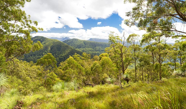 Toonumbar National Park - Accommodation Gold Coast