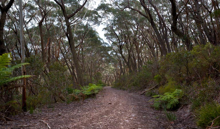 Budawang National Park - Accommodation Gold Coast