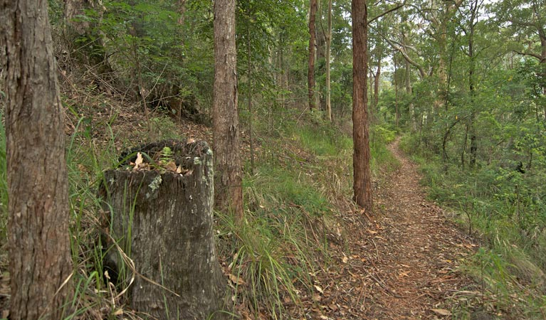 Border loop walk - Accommodation Gold Coast