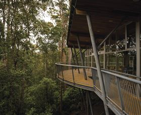 Tarkine Forest Adventures - Dismal Swamp - Accommodation Gold Coast