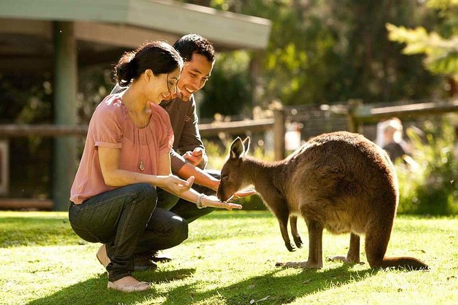 Very Best of Perth Tour - Wildlife Park  City Highlights Tour - Accommodation Gold Coast
