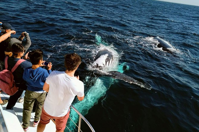 Half-Day Whale Watching and Canal Cruise from Surfers Paradise - Accommodation Gold Coast