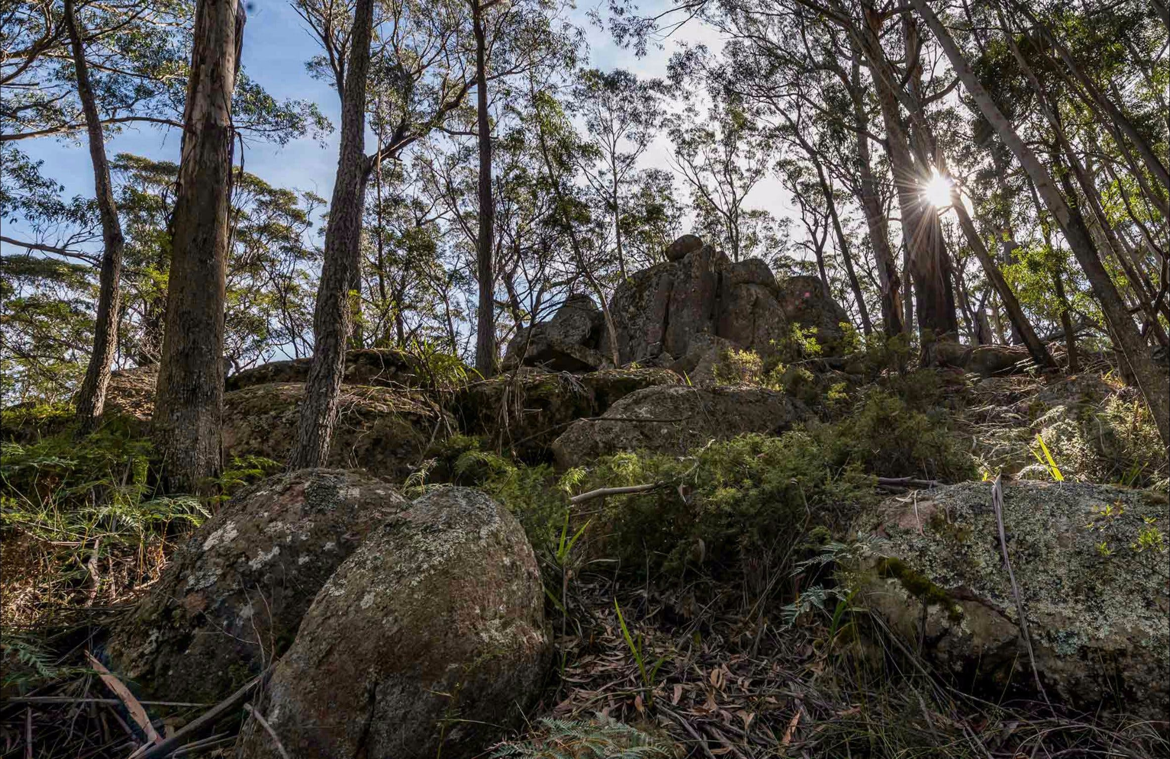Pheasants Peak Walking Track - Accommodation Gold Coast