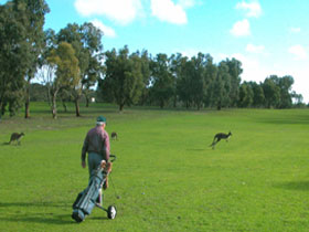 Coffin Bay Golf Club - Accommodation Gold Coast
